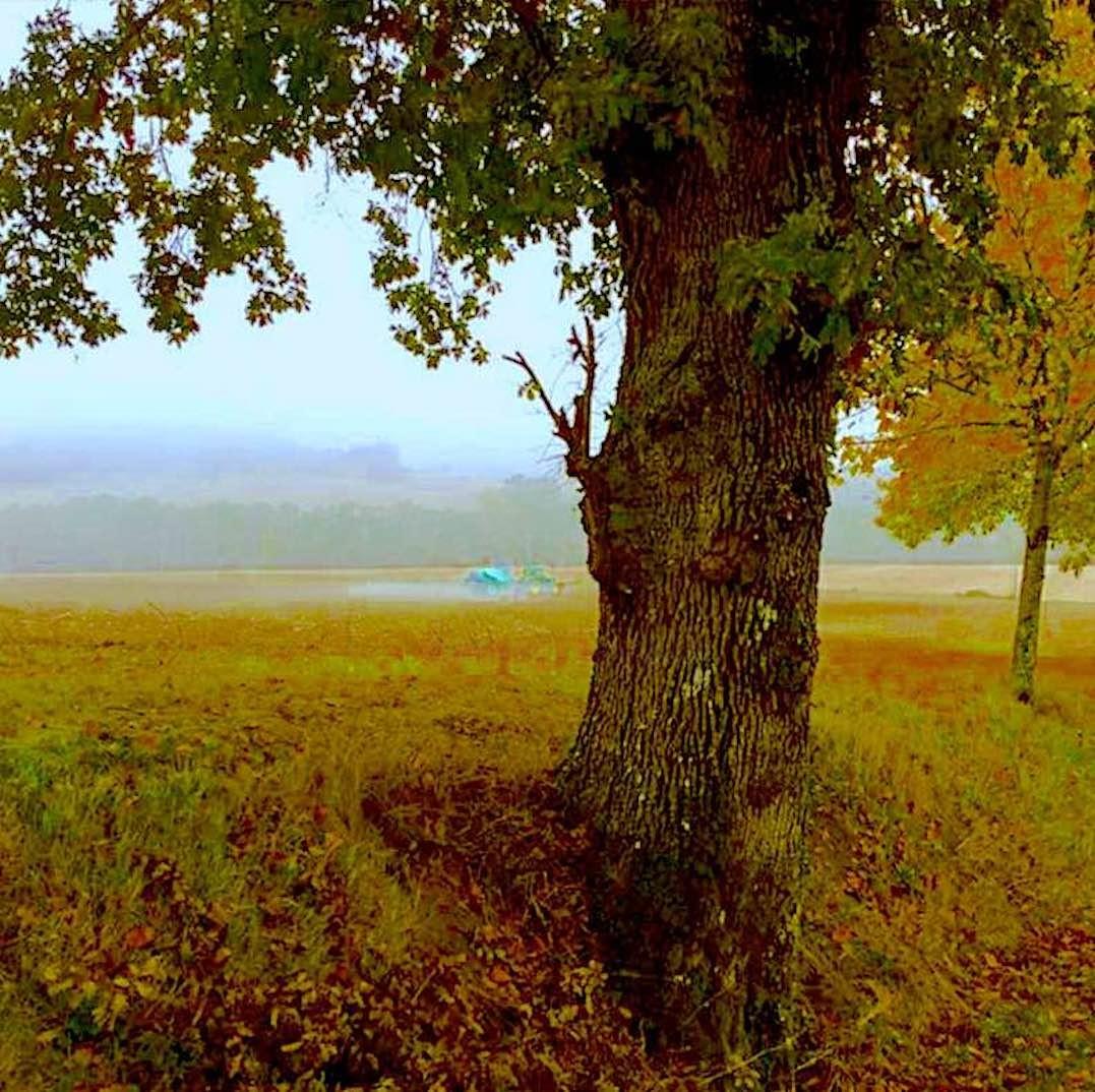 Kirlian - Tree1